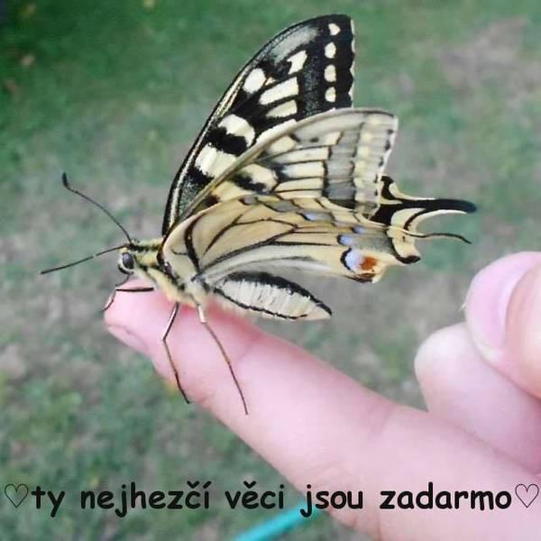 3_10_zobrazeni.jpg